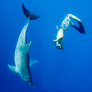 320x320_dolphinswim01