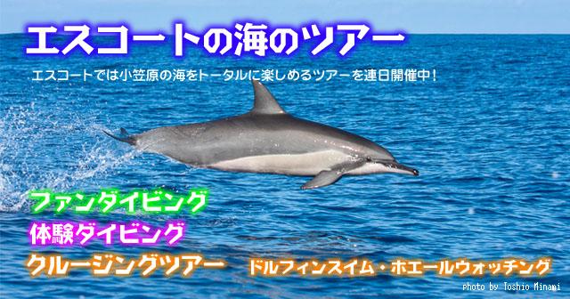 エスコートの海のツアー★小笠原の海をトータルに楽しめるツアーを連日開催中!